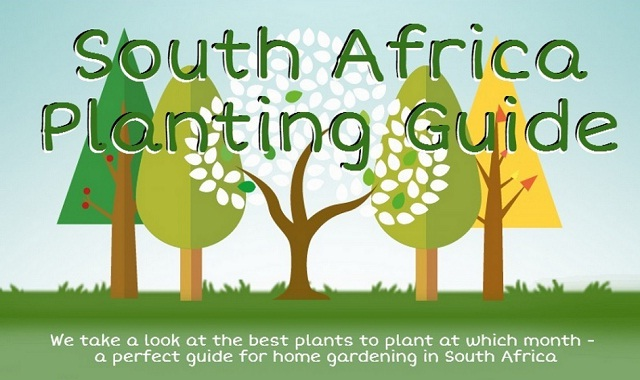 maize planting guide south africa