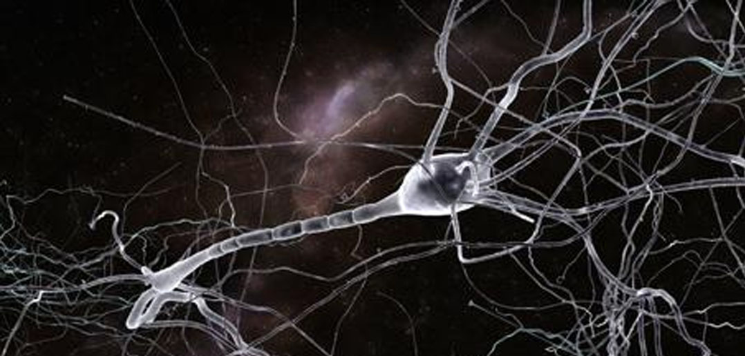 what neuroglia cell support and guide